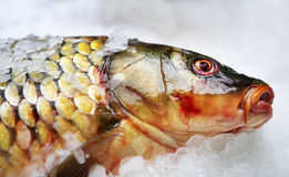 Big fish on ice. On the counter of the store Royalty Free Stock Photo