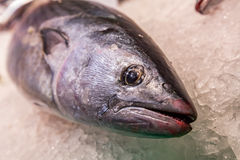 Big fish for sale Royalty Free Stock Photos