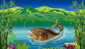 A big fish in the sea. Illustration of a big fish in the sea Royalty Free Stock Image