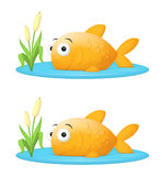Big Fish In A Small Pond Stock Photography
