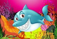 A big fish. Under the sea Stock Photos