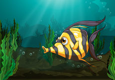 A big fish under the sea Royalty Free Stock Images
