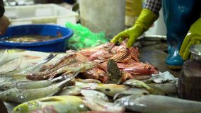 Big fishes on counters. Fresh fish on a market counter in Vietnam. Big fishes on counters. On this video you can see market place on streets of Vietnam. A large stock video footage