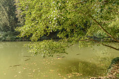 Big fishes in lake at Villa Reale park, Monza, Italy Stock Photos