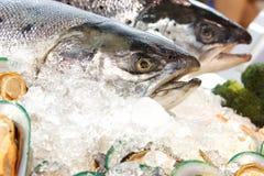 Big fishs. Sea food-frozen Stock Image