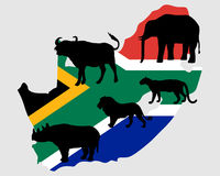Big Five South Africa Royalty Free Stock Photos