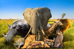 Wild african animals background royalty free stock photos