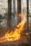 Big flame on forest fire Stock Photography