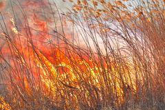 Big flames on field during fire. Accidental disaster.  royalty free stock images