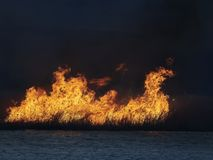 Big flames on field during fire. Dried reed burning on the shore of the lake Stock Photo