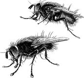 Big flies. Vector drawing of the big houseflies Stock Photos
