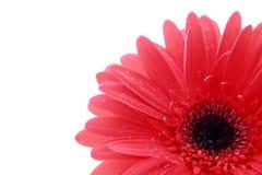 Big flower Royalty Free Stock Photos