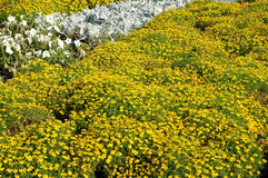 Big flower bed Royalty Free Stock Image