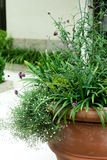 Big Flower Pot Stock Photo