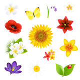 Big Flowers And Leaf Set Royalty Free Stock Photos