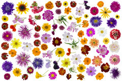 Big flowers set isolated Royalty Free Stock Photos
