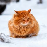Big fluffy ginger cat sitting in the snow 1:1. Stray animals in winter, homeless frozen cat Stock Photo