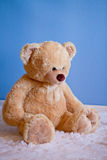 Big fluffy teddy bear in front of blue wall Royalty Free Stock Image