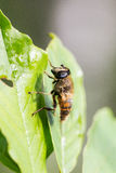 Big fly on green leaves Stock Photos