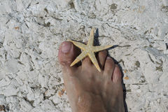 Big foot barefoot and starfish on white rocks in summer Stock Photography