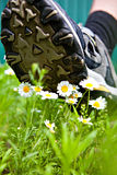 Big foot comes to flowers Stock Photo