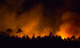 Big forest fire during night. stock photo
