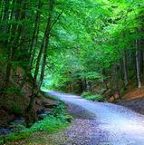 Big forest. Pathway to Poiana Brasov Royalty Free Stock Image
