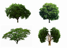 Big four tree sets isolated on white background. Royalty Free Stock Photos