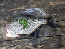 Big fresh fish bream. On glass plate royalty free stock photography