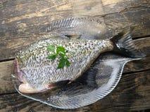 Big fresh fish bream. On glass plate stock photo