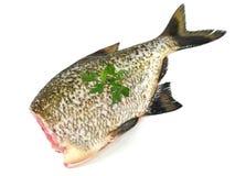 Big fresh fish bream. On white background stock photo