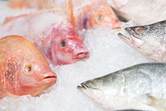 Big fresh fish on ice for dinner Royalty Free Stock Photography