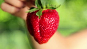 Big, fresh, juicy strawberries in the hands of man. Hands holding a strawberry. Strawberry close-up Stock Photography