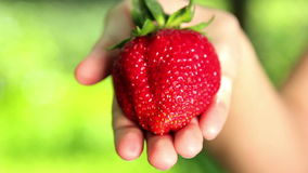 Big, fresh, juicy strawberries in the hands of man. Hands holding a strawberry. Strawberry close-up Royalty Free Stock Photography
