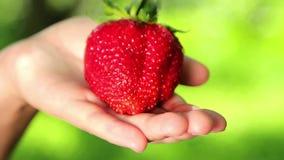 Big, fresh, juicy strawberries in the hands of man. Hands holding a strawberry. Strawberry close-up Stock Photo