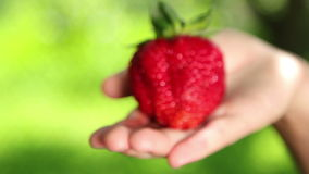 Big, fresh, juicy strawberries in the hands of man. Hands holding a strawberry. Strawberry close-up Royalty Free Stock Photo