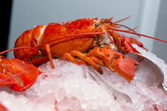 Big fresh lobster in the white plate fot dinner Stock Images