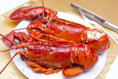 Big fresh lobster in the white plate fot dinner stock photography