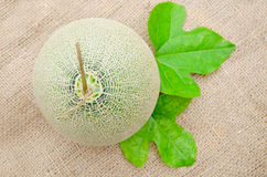 Big fresh Melon and leaves Royalty Free Stock Photos