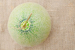 Big fresh Melon Royalty Free Stock Images