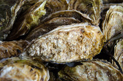 A big fresh oyster seashell Royalty Free Stock Photos