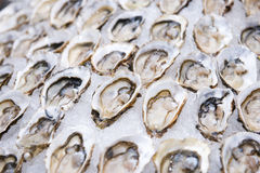 Big fresh oyster in the white plate fot dinner Royalty Free Stock Images
