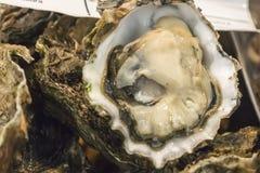Big fresh oysters (Ostrea edulis).  Royalty Free Stock Photo