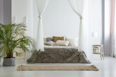Big fresh plant standing on the floor in white bedroom interior. With canopy bed with fur blanket, books on small wooden table with lamp and brown carpet stock image
