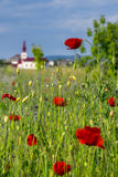 Big fresh poppies in the field. Big fresh poppies in the green field near the village church Royalty Free Stock Photography