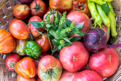 Big fresh red tomatoes Royalty Free Stock Photos