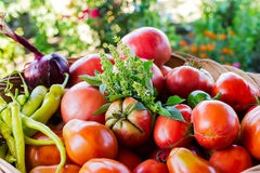Big fresh red tomatoes Royalty Free Stock Photo