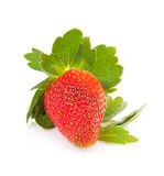 Big fresh strawberry Royalty Free Stock Photos