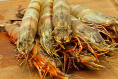 Big fresh tiger prawns, king prawns Stock Photography
