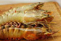 Big fresh tiger prawns, shrimp Stock Images